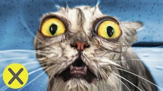¿Por qué los gatos odian el agua? (PyR)