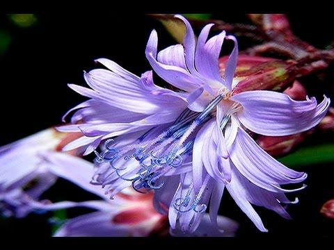 Flores exoticas iii youtube - Flores tropicales fotos ...