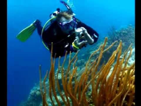 PADI Scuba Diving Lessons: PADI Digital Underwater Photographer Course