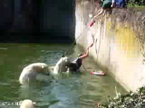 Polar Bear Diagram Residential Wiring Attack Zoo