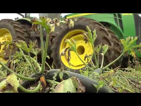 Farmers Losing Crops due to Worker Shortage