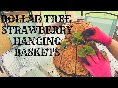 DIY DOLLAR TREE STRAWBERRY HANGING BASKET SPHERES||CONTAINER GARDENING