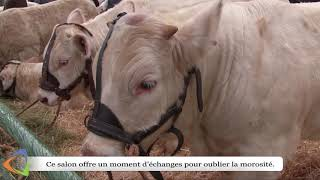 Un salon du charolais à Avallon