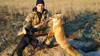 Охота с ягдтерьером , норная охота на лису , сезон открыт (размен в норе) .Fox Hunt with Jagdterrier