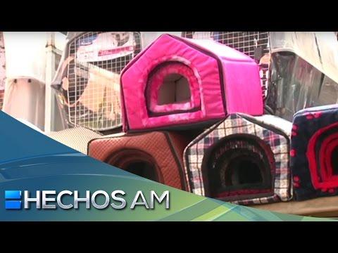 ¿Cómo opera una tienda de accesorios para mascotas?   Construyendo mi sueño