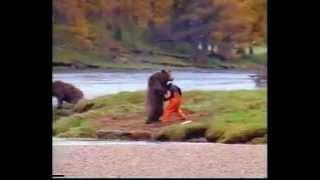 karate bear (medvěd předvádějící karate)