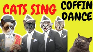 Coffin Dance by Cats (Astronomia) | Cats Singing Song Parody