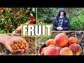 8 Tips For Growing FRUIT TREES! Organic Gardening