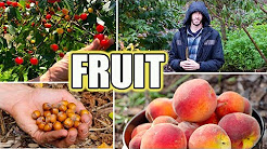 8 Tips For Growing FRUIT TREES! Organic Gardening