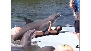 Funny Dolphin Video