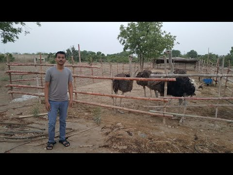 Jari Farmhouse Karachi  Elegant Gallery With Jari Farmhouse Karachi