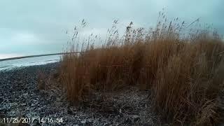 Охота на лис с Русскими Пегими Гончими