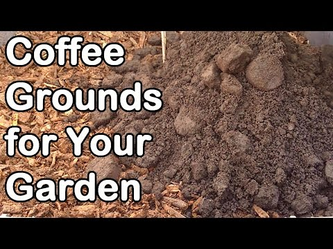 Coffee Grounds: How And Why We Use Them In Our Garden