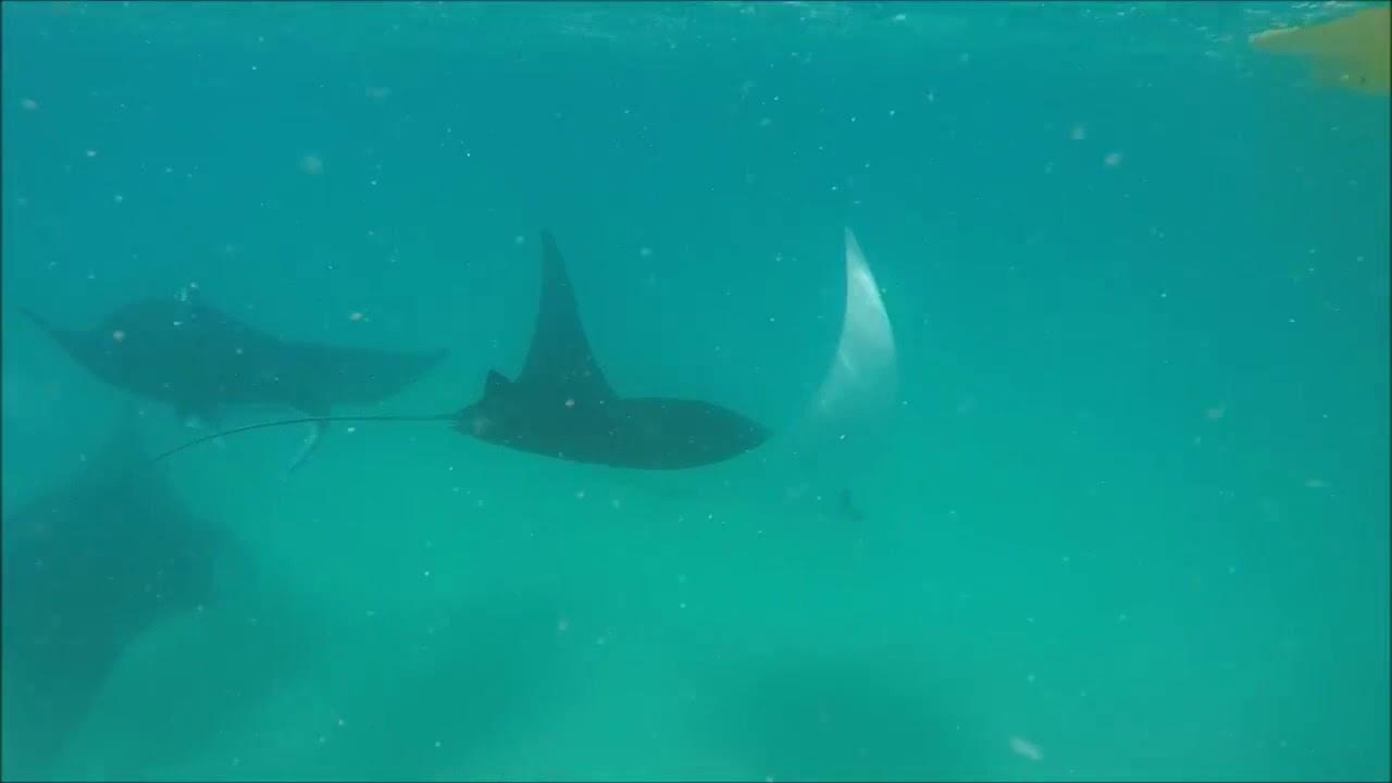 video Rainbow Beach Dolphin View Kayak Tour