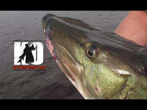 Targeting MONSTER Mid-Summer Muskies while Fishing on Lake Vermilion, Minnesota