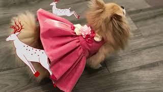 Zoé Haute Couture par Fiona