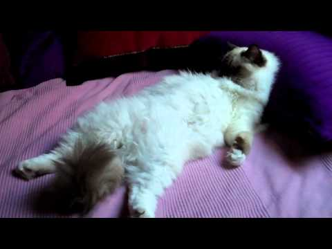 CHAT ZEN; CAT RELAX
