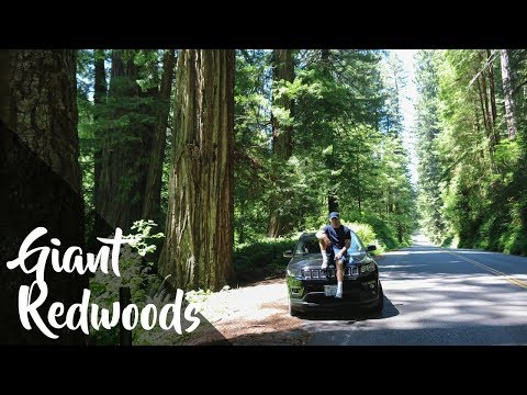 The Giant Redwoods Of California - The Big American Road Trip