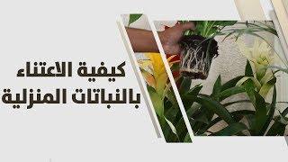 أمل القيمري - كيفية الاعتناء بالنباتات المنزلية