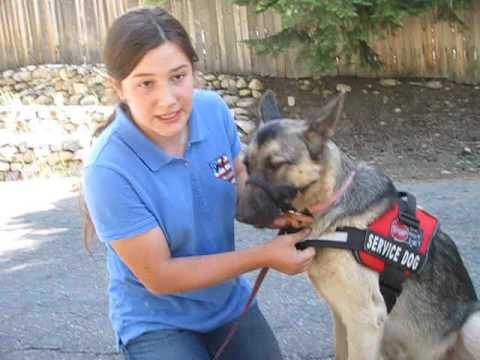 Nevada Service Dogs Yerani and Sniper autism assistance dog