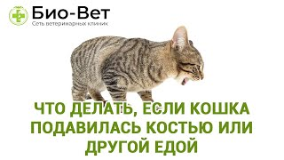 Что делать, если кошка подавилась костью или другой едой. Ветеринарная клиника Био-Вет.