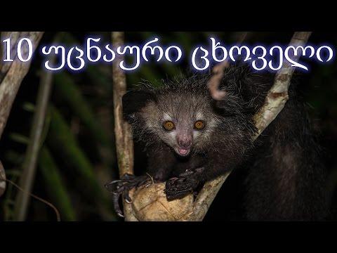 10 ყველაზე უცნაური ცხოველი (ვიდეო)