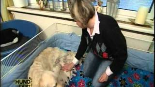 Atv Serie (hund & Katz) Folge 1  - Www.goldenretriever.at