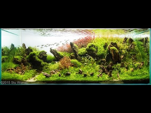 Best Aquascapes Of The World