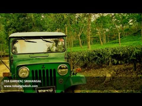 Beautiful Bangladesh Srimangal Tea Garden Sylhet Division