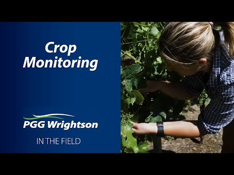 In the Field   Crop Monitoring