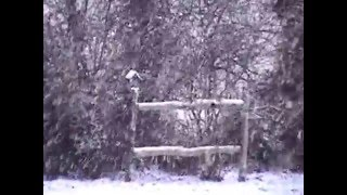 White Christmas sung by Anne Murray YouTube Videos