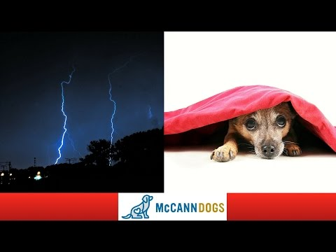 How To Calm A Dog That's Afraid Of Thunder - Professional Dog Training Tips