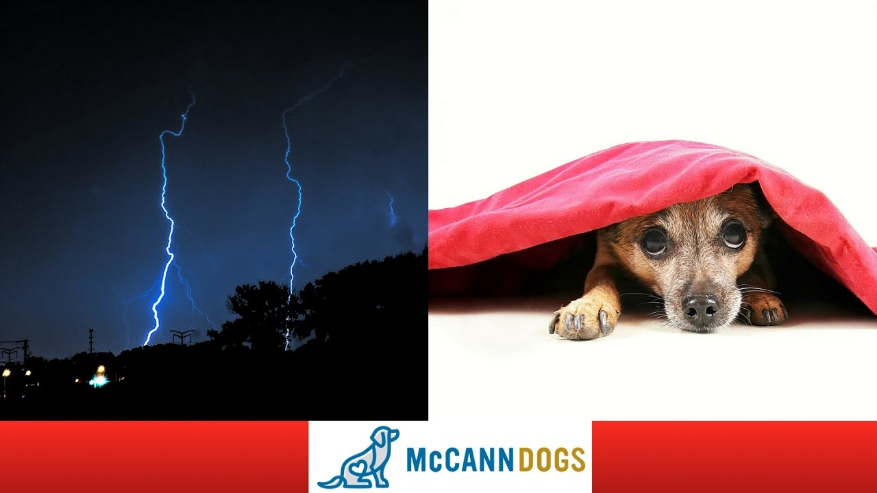 How To Calm A Dog That S Afraid Of Thunder Professional Training Tips