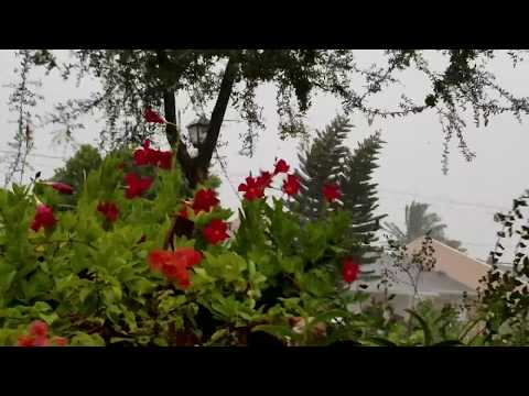 East Orchids And Garden  (Tropical Storm Gordon)