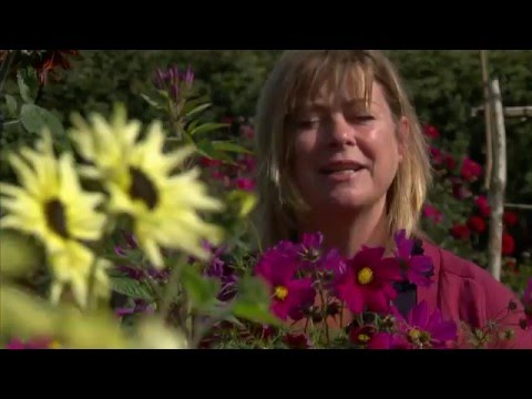 BBC Two: Bees Butterflies and Blooms. Part One of Three