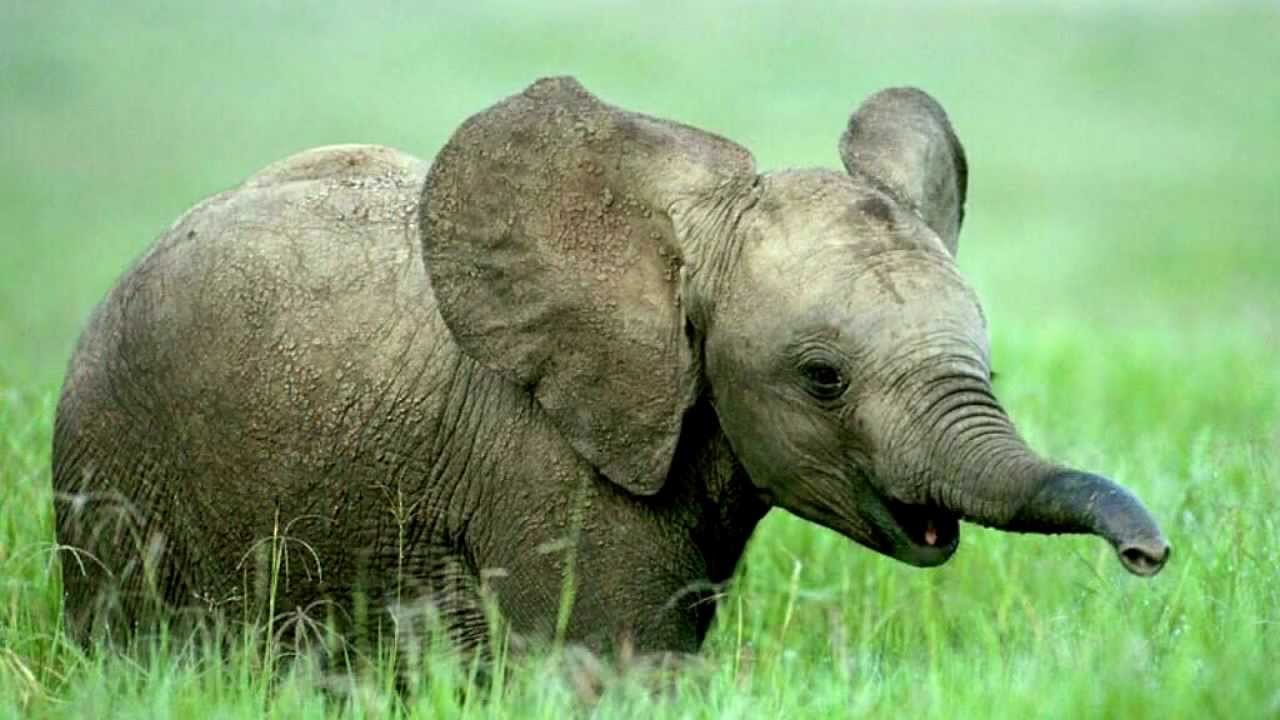 elephant sounds and elephant pictures youtube