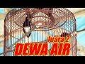 Dunia Hobi Aksi Kacer Dewa Air Juara  Di Event Surya Cup   Mp3 - Mp4 Download