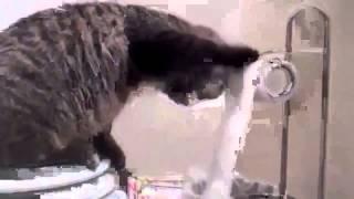 Кот играет в игры на планшете