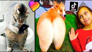 КТО КРУЧЕ СМЕШНЫЕ КОТЫ или СОБАКИ в ЛАЙК и ТИКТОК НЕ ЗАСМЕЙСЯ ЧЕЛЛЕНДЖ Funny Cats Dogs Валеришка