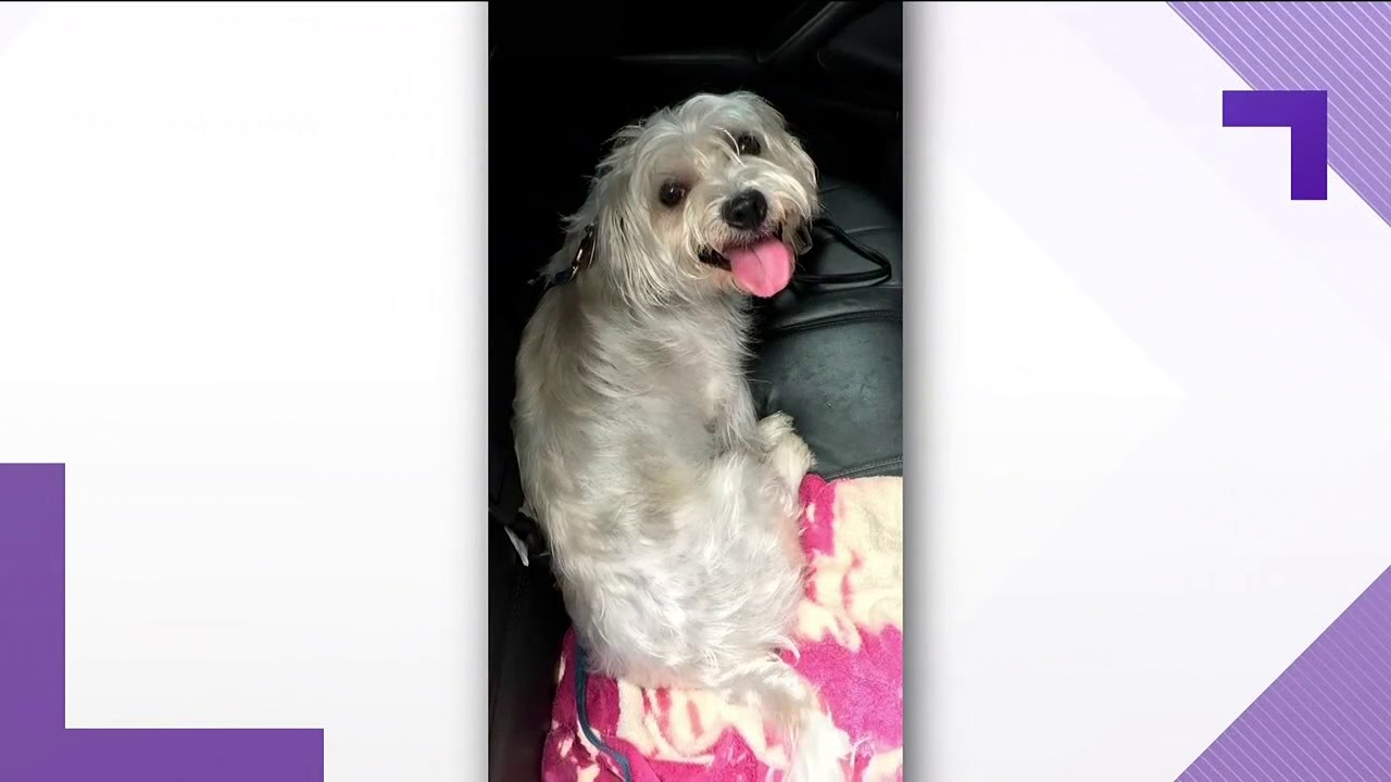 Marietta police warn pet owners after dog left in hot car