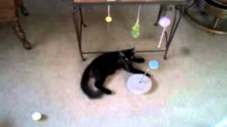 Kittens playing all crazy