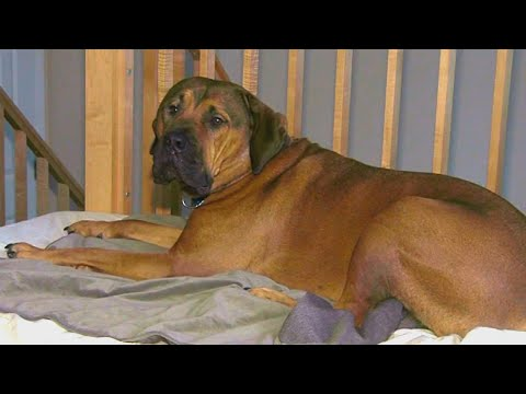 Scott Sloan - VIDEO: Woman Discovers Stranger Sleeping In Her Home With Her 'Guard Dog'