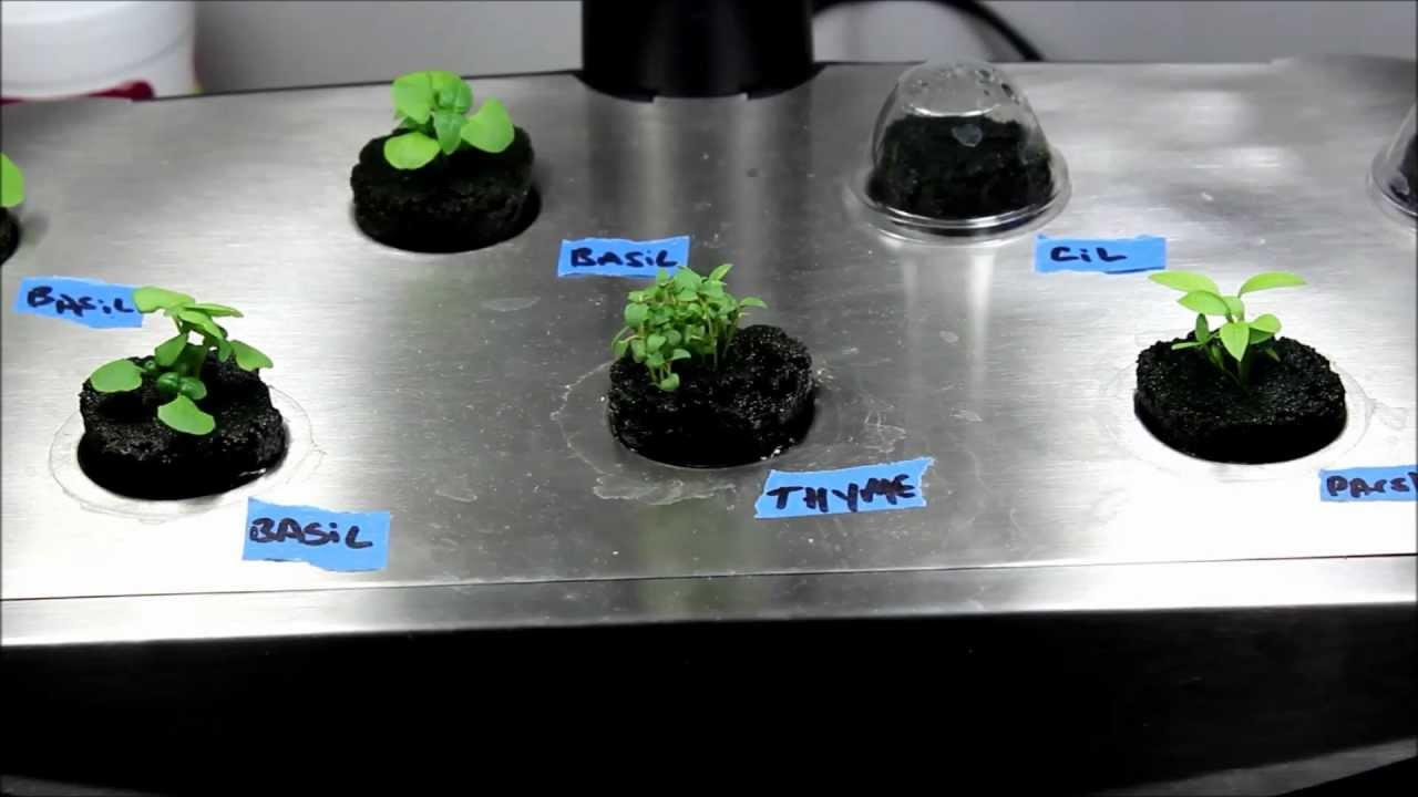 Make Your Own Aerogarden Seed Pods Diy Seed Pod Kits