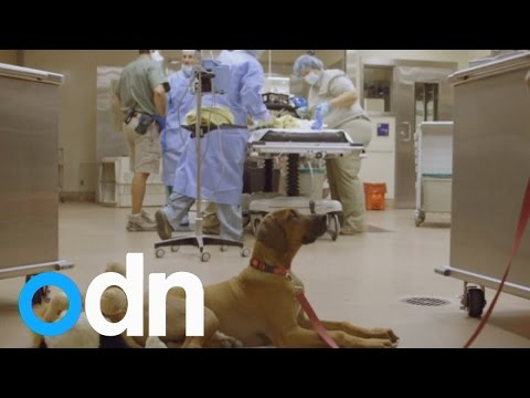 Puppy Keeps Cheetah Cub Company During Surgery