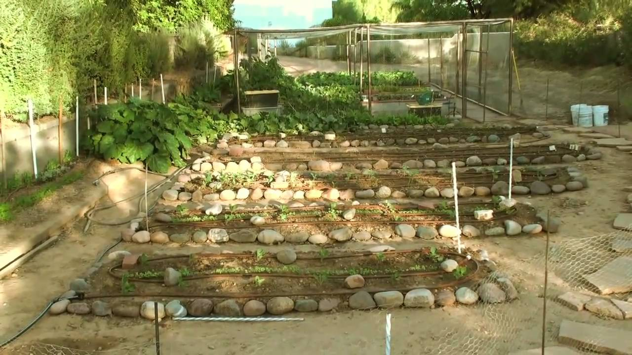 Lovely Phoenix Fall/Winter Vegetable Garden 10 31 10   YouTube