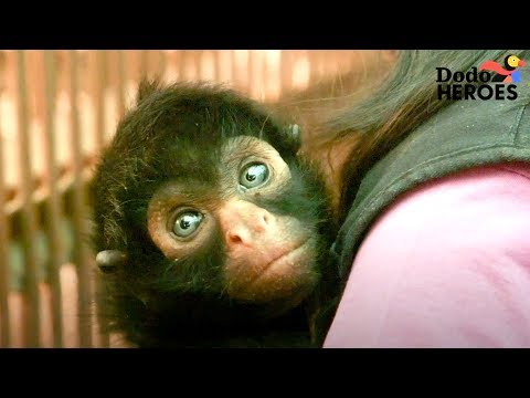 Spider Monkey Rescued From Circus Meets His First Friend | Dodo Heroes