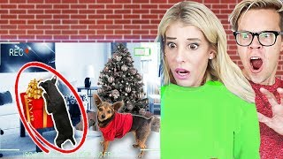 Hidden GoPro Camera Reveals our Dogs Opening Christmas Presents Early! | Spying for 24 hours!