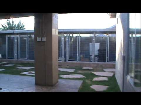 #1 Bully Kennel in America, Cock Diesel Kennels, Home of the XL BULLY