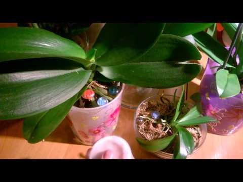 Фаленопсис, уход за листьями.