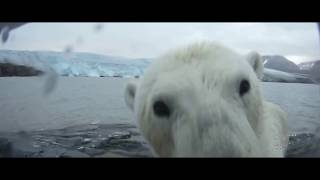 Смерть видеорегистратора или белые медведи на Шпицбергене